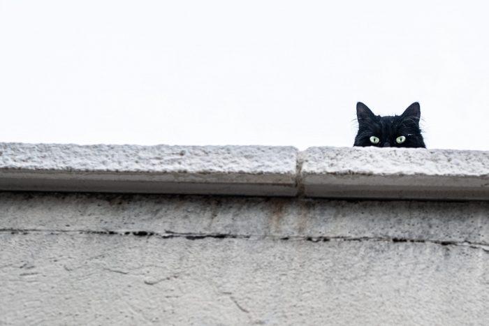 cats q220